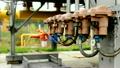 gas plant 13617842