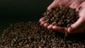 コーヒー豆  13718158