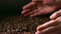 コーヒー豆  13718159