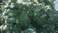 ปะการัง,ในทะเล,ปลา 13837576