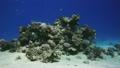 ปะการัง,ในทะเล,ใต้น้ำ 13837600