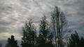 タイムラプス 雲 木の動画 13991807