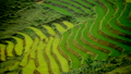 Zoom Out - Scenic Rice Farm Terraces - Northern Mountains of Sapa Vietnam 14070122