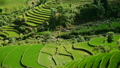 Time Lapse Pan - Rice Terraces in Green Valley Mountains of Sapa Vietnam  14070123