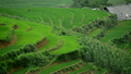 Zoom Out - Scenic Rice Farm Terraces - Northern Mountains of Sapa Vietnam 14070126