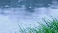 雨 14277685