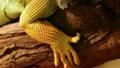 鬣蜥蜴 爬行动物 生物 14352329