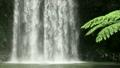 ミラミラの滝(クローズアップ) 14559099