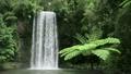 ミラミラの滝 14559161