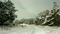 Winter forest landscape and the road 14625387