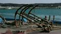 漁港 海浪 海鷗 14642179