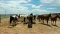 말, 농장, 목장 14978206