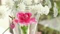 記念日の花 15090977