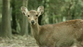 deer deers animal 15195846