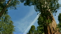 Sequoia National Park Time Lapse 10 Grant General Trees and Clouds Grant Gloves 15210567