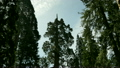 Sequoia National Park Time Lapse 12 Grant Glove 15210569