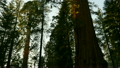 Sequoia National Park Time Lapse 13 Grant Glove 15210570