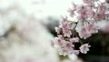 flower, botanicals, naturals 15394053