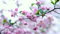 flower, botanicals, naturals 15394145