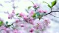 flower, botanicals, naturals 15394146