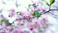 flower, botanicals, naturals 15394147