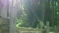 レッドウッドの森 ドリー&パン 12 サンタクルーズ 15513468