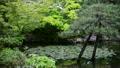 奈良 依水園の風景 15546471