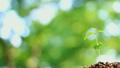 森の中の芽生え 15604808
