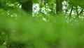 柔らかな新緑の季節 15634192