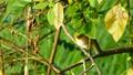 鳥 繡眼鳥 鳥兒 15640958