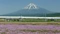 신칸센과 후지산과 꽃밭 맑은 푸른 하늘 2015 년 5 월 촬영 도쿄 발 틸트 업 15741869