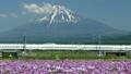 신칸센과 후지산과 꽃밭 맑은 푸른 하늘 2015 년 5 월 촬영 도쿄 행 틸트 업 → 포커스 인 15741873
