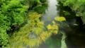 信州安曇野春天的春天 15807900