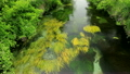 信州 安曇野の湧水 15807900