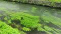 信州 安曇野の湧水 15807901