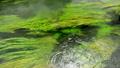 信州 安曇野の湧水 15807902