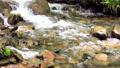 新緑の渓流 15807932
