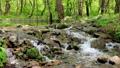 新緑の渓流 15807933