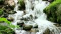新緑の渓流 15807934
