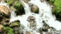 新緑の渓流 15807935