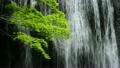 瀑布和枫树 15864678