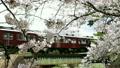 櫻花阪急列車 15927306