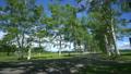 十勝牧場(音更町駒場)の白樺並木 15974318