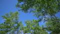 新緑の森 青い空 15974319