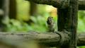 胡桃を食べるシマリス 16123493