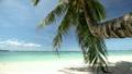 Tropical coastline with white sand 16367379