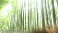 嵐山 嵯峨野 竹林の道の動画 16393923