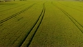 まるで外国?! 北海道の広大な小麦畑を飛ぶ! 16548921
