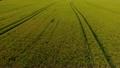 北海道産小麦「ゆめちから」の畑を空撮! 16548922