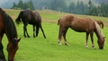 Beautiful horses on the pasture 16614716